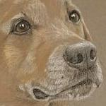 Rolex - cross breed portrait
