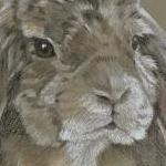 Sandy - Rabbit Portrait