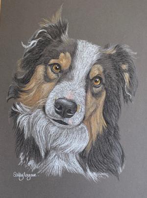 Nalea - Tri-colour Border Collie Portrait