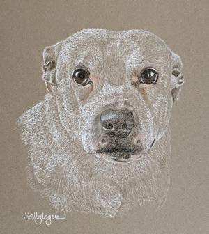 Lilly - White Staffie Portrait