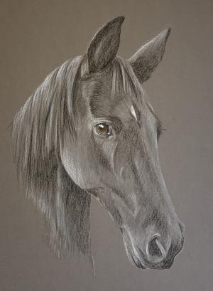Penny - Black Pony Portrait