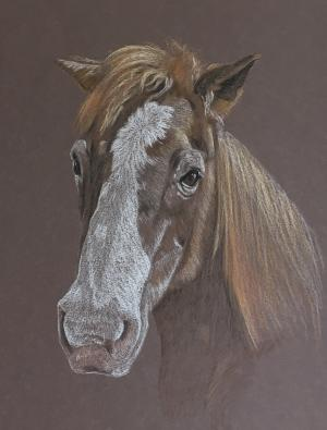 Doc - Horse Portrait