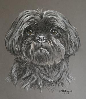 Bo - Shi Tzu Portrait
